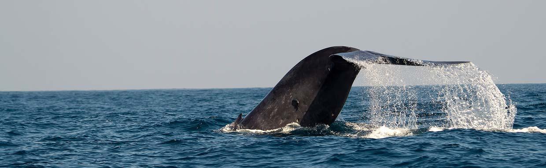 Header-Blue-Whale-Tony-Sawbridge