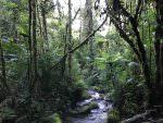 Trail near Los Quetzales Lodge © J Badley