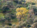Sierra de Andujar © G Dean