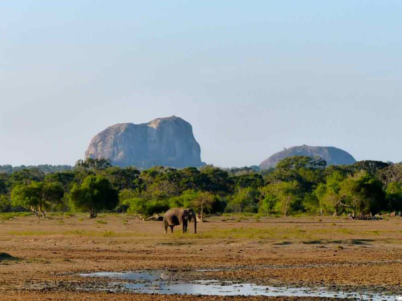 Elephant Rock, Yala with Asian Elephant © D Blakeley