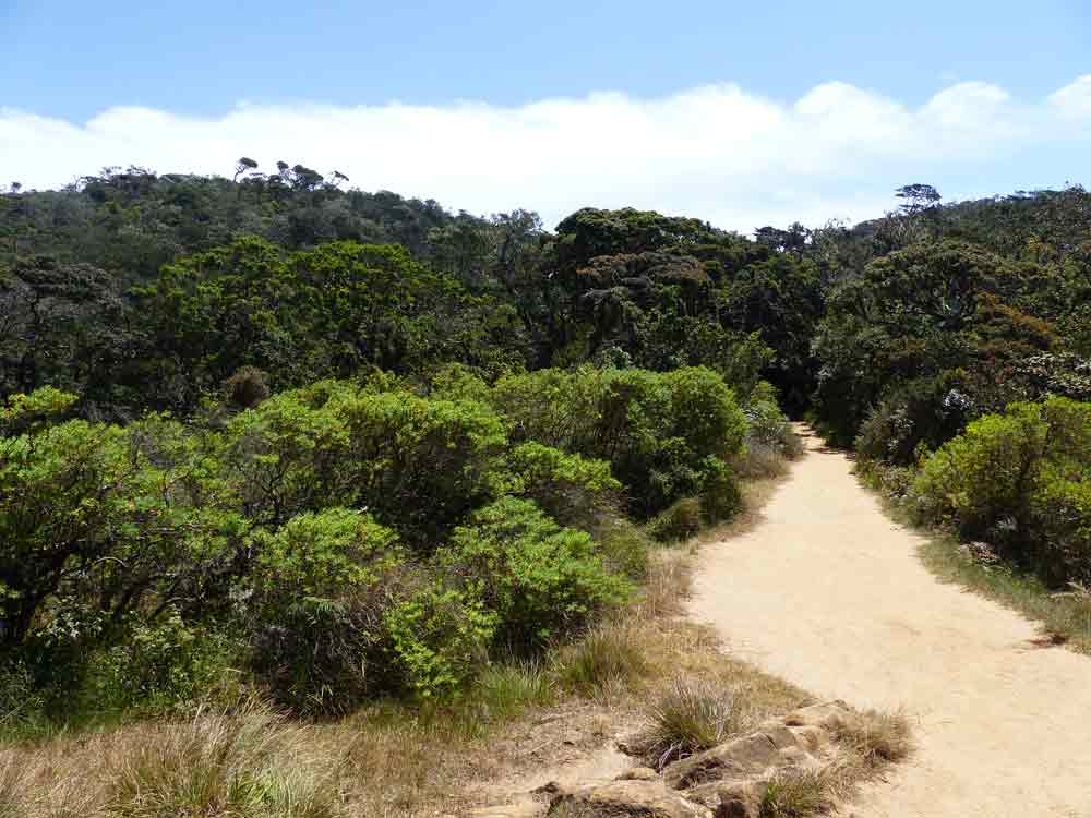 Horton Plains trail to Mini World's End © J Thomas