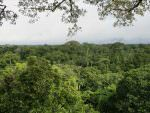 Canopy habitat, Yasuni National Park from tower © J Thomas