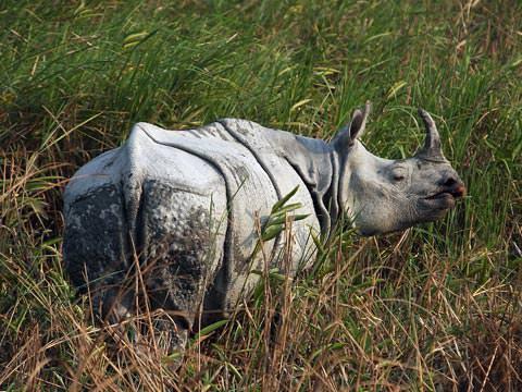 Indian One-horned Rhino © W Scott