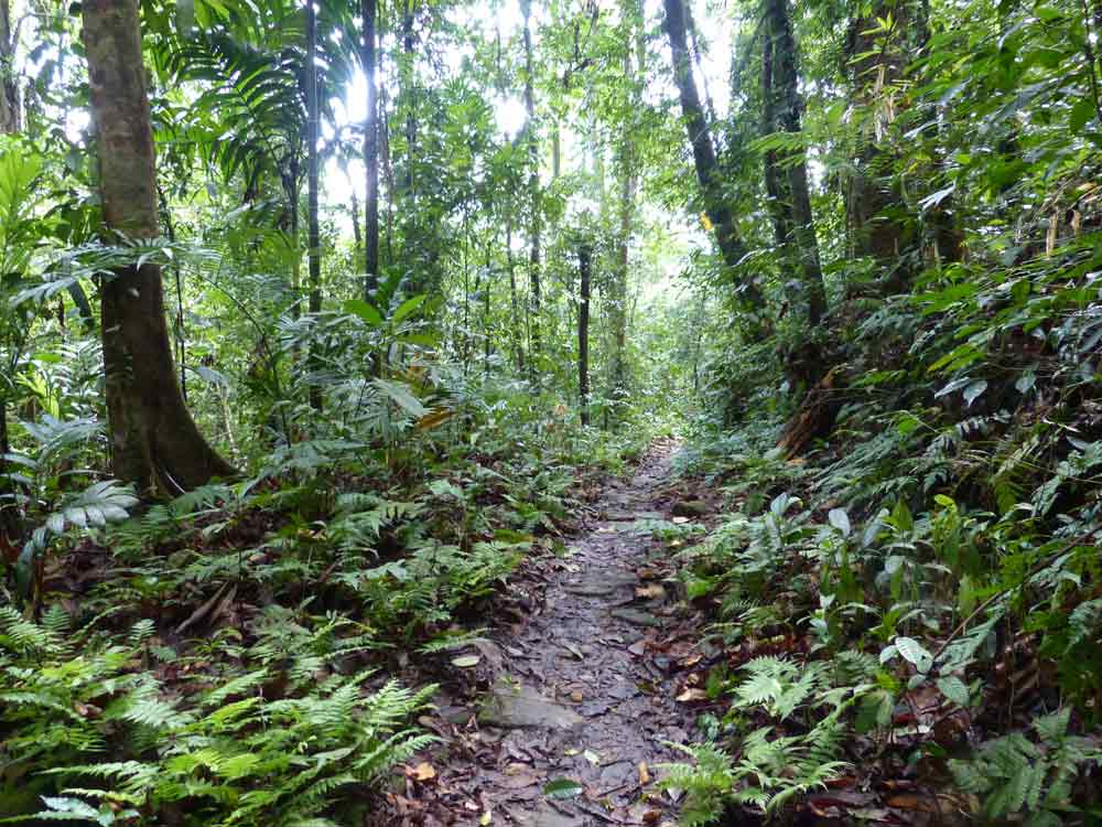 Makandawa forest trail, Kithulgala © R Wakely