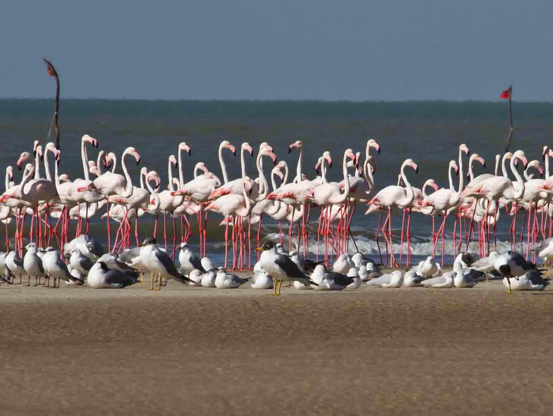 Modhva Beach, near Bhuj © T Lawson
