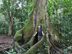 Forest habitat, Panama © J Badley