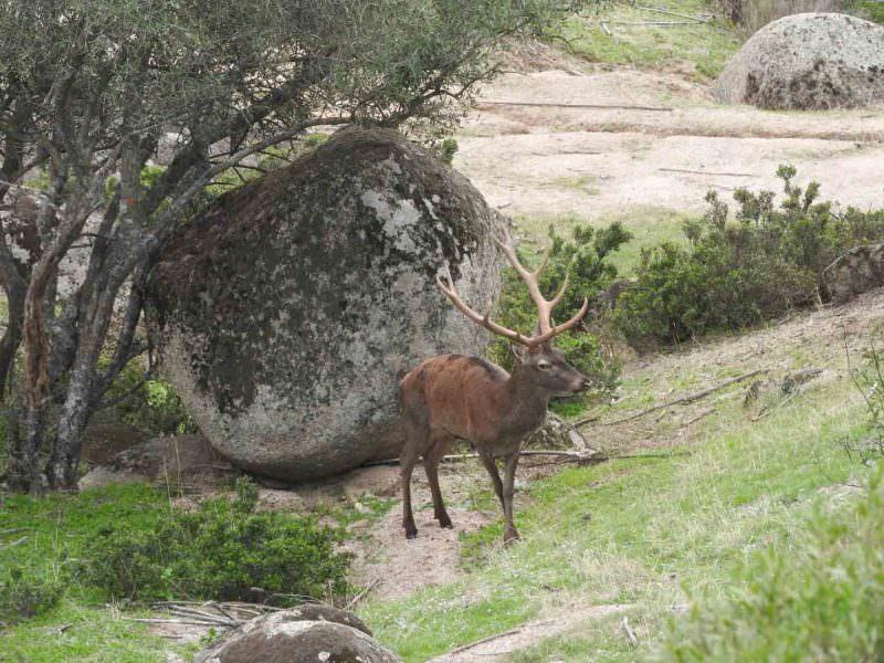 Red Deer, La Lancha © H Moore