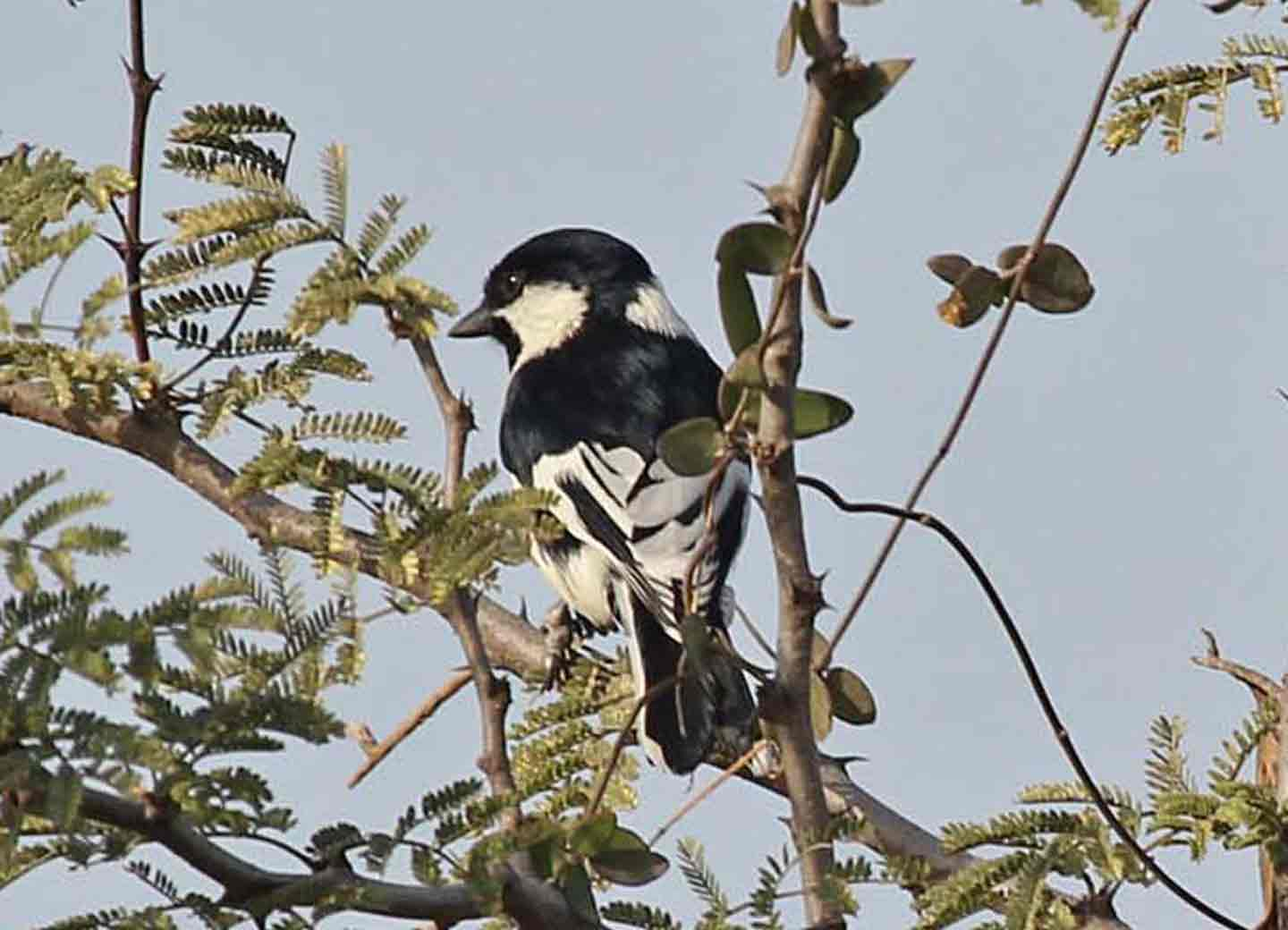 Gujarat's Iconic Birds (7 days) B407 - Wild About Travel